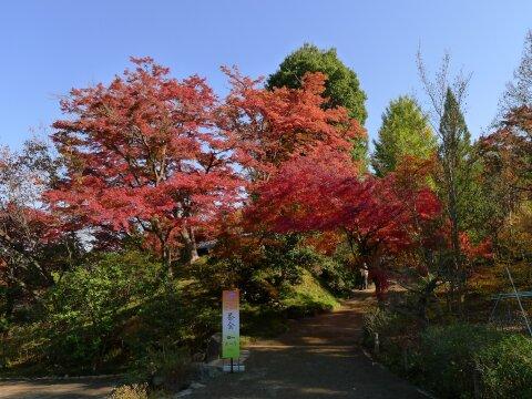 達磨寺 紅葉201302.jpg