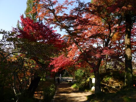 達磨寺 紅葉201305.jpg