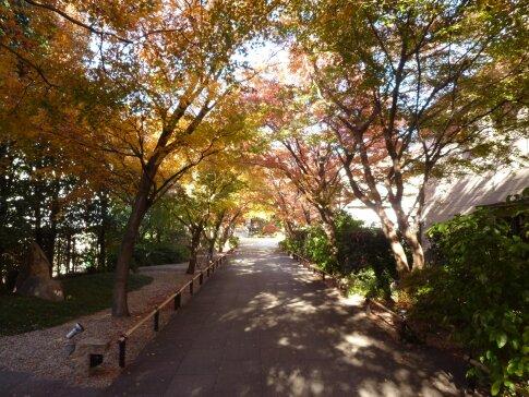 高円寺の紅葉3.jpg