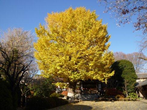 高円寺の紅葉5.jpg