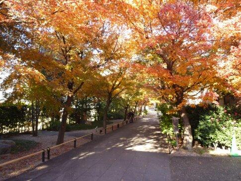 高円寺の紅葉6.jpg