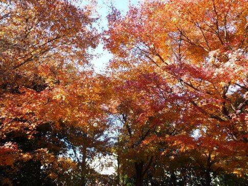 高円寺の紅葉7.jpg