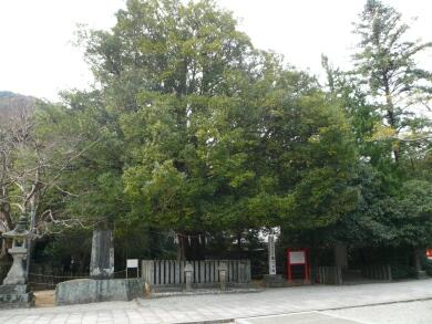 なぎの大樹