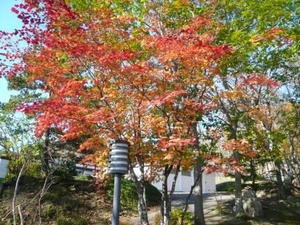 オホーツク庭園 紅葉1.jpg