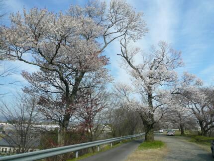 霞間ヶ渓の桜2.jpg