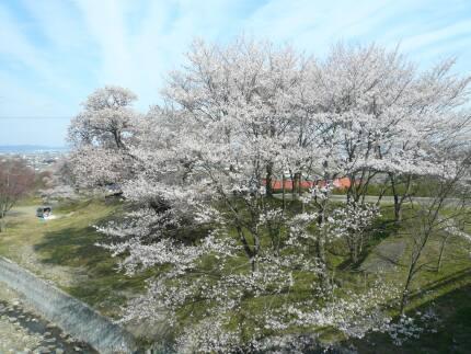 霞間ヶ渓の桜4.jpg