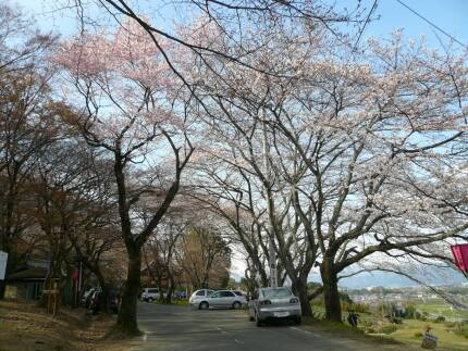 霞間ヶ渓の桜5.jpg