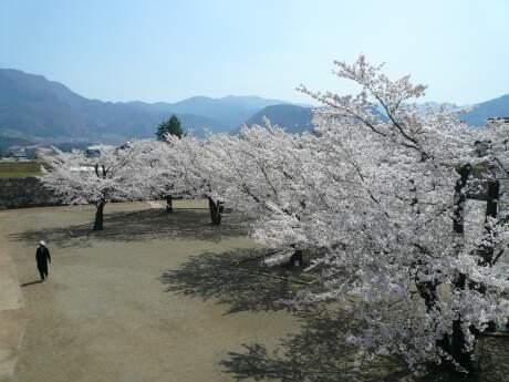 海津城の桜4.jpg