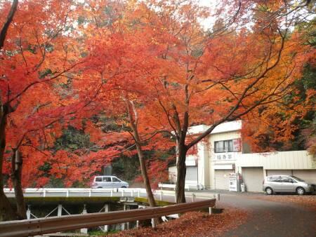 鎌北湖 紅葉4.jpg