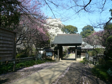 興禅院山門