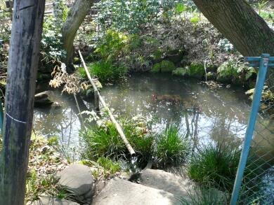 興禅院放生池