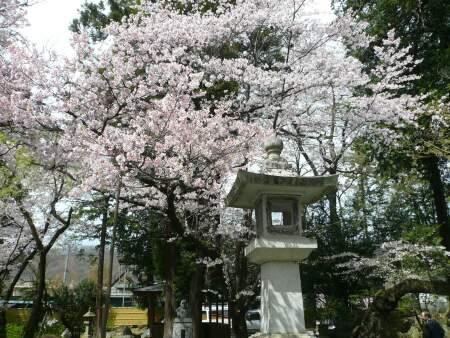 恵林寺 桜3.jpg
