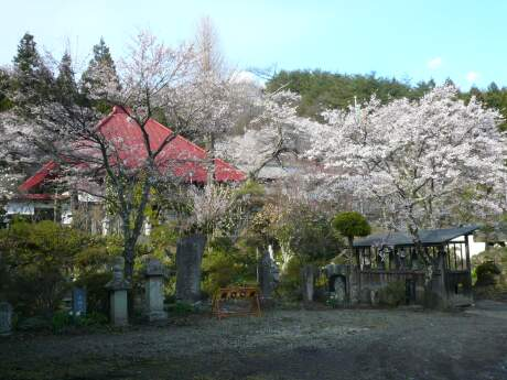 慶福寺の桜2.jpg