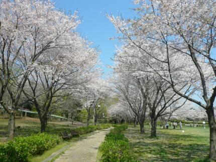 絹の台桜公園2.jpg
