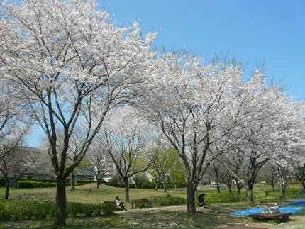 絹の台桜公園3.jpg