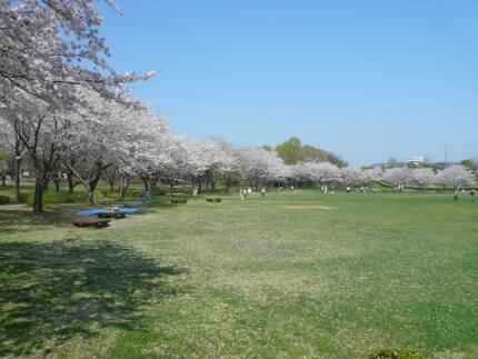絹の台桜公園4.jpg