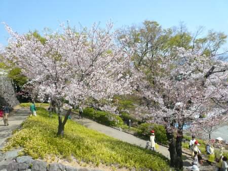 甲府城の桜3.jpg