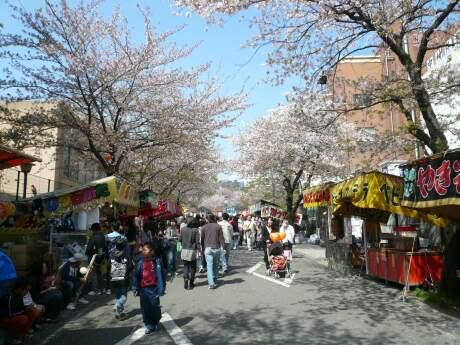 甲府城の桜4.jpg
