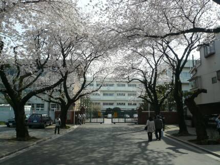 川越女子高校前の桜並木2.jpg