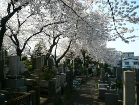 染井霊園2010012.jpg