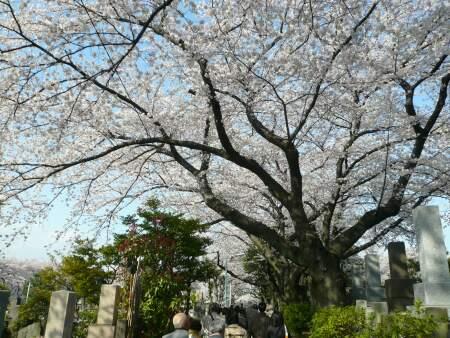 染井霊園2010013.jpg