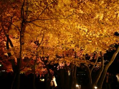 曽木公園紅葉