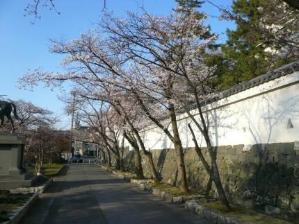 大垣城 桜2.jpg