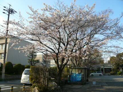 大垣城 桜4.jpg