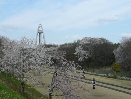 大野極楽寺公園の桜6.jpg