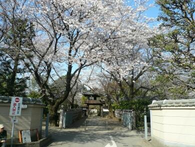中院_桜2008