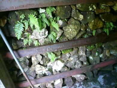 長走風穴高山植物群