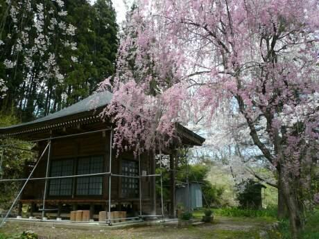 長谷堂城 桜4.jpg