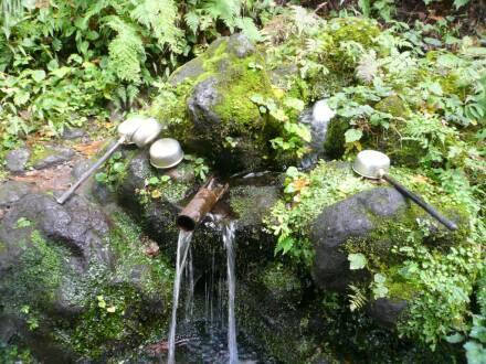 杜々の森湧水2.jpg