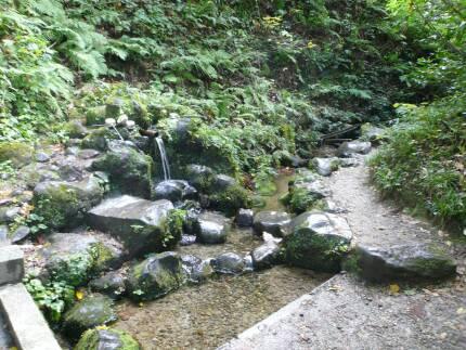 杜々の森湧水3.jpg
