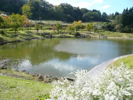 杜々の森湧水4.jpg