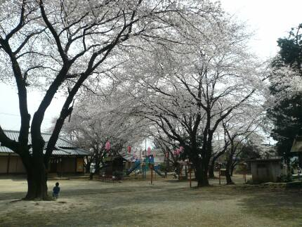 日枝神社の桜4.jpg