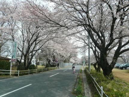 日本薬科大学脇2.jpg