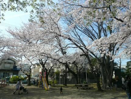 浮島稲荷神社の桜2.jpg