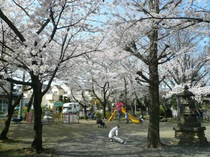 浮島稲荷神社の桜3.jpg