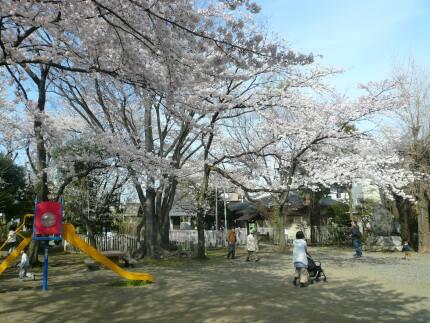 浮島稲荷神社の桜1.jpg