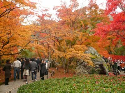 宝厳院の紅葉