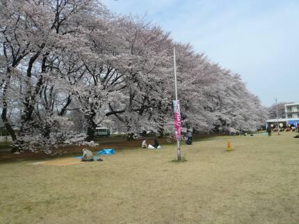 無線山の桜3.jpg
