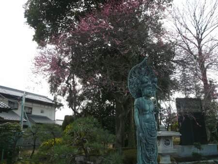 蓮花院 梅.jpg