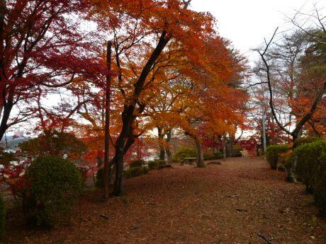 棚倉城の紅葉2.jpg