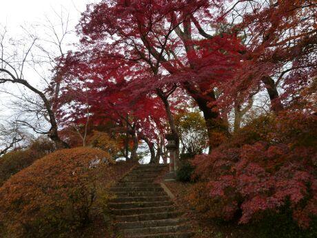 棚倉城の紅葉4.jpg