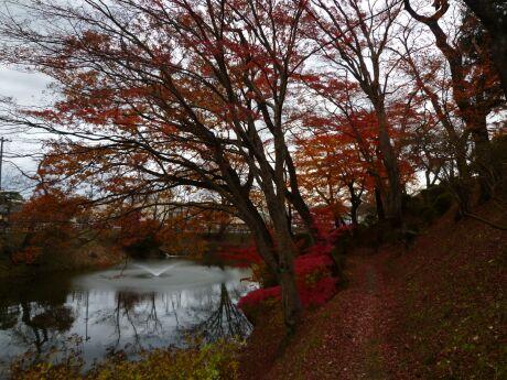 棚倉城の紅葉6.jpg