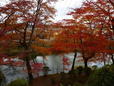棚倉城の紅葉1.jpg
