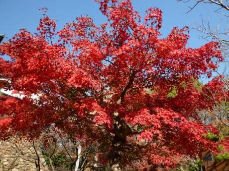 犬山城 紅葉3.jpg