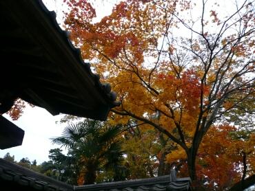 補陀寺の紅葉