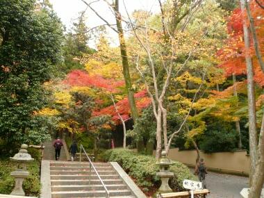 今熊野 紅葉